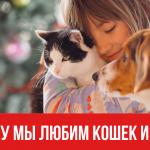 Почему мы любим кошек и собак
